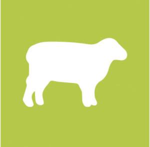 Filière ovins